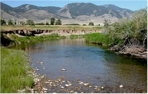 Fishing montana 39 s ruby river for Ruby river fishing report