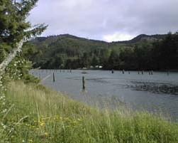 Fishing oregon 39 s selitz river for Siletz river fishing report