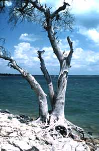Fishing lake whitney texas for Lake waco fishing report